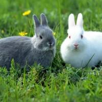 Обзор одежды и аксессуаров с изображениями кроликов>