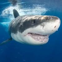 Обзор одежды и аксессуаров с принтами акулы>