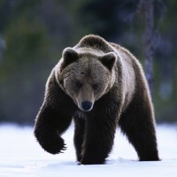 Одежда и аксессуары c изображениями медведя>