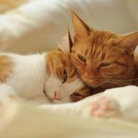 Коты и кошки>