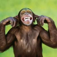 Подборка одежды и аксессуаров c изображениями обезьяны>