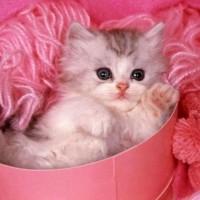 Выбираем одежду и аксессуары c изображениями котенка>