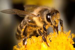 С пчелами