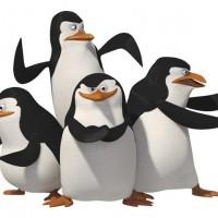 Пингвины>