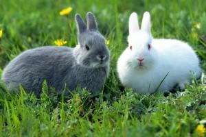 Обзор одежды и аксессуаров с изображениями кроликов