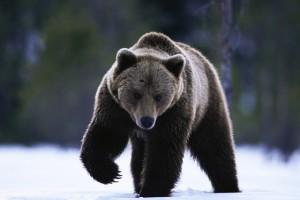 Одежда и аксессуары c изображениями медведя