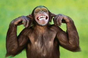 Подборка одежды и аксессуаров c изображениями обезьяны