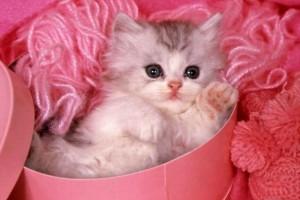 Выбираем одежду и аксессуары c изображениями котенка