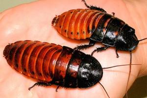 Выбираем одежду и аксессуары c изображениями тараканов