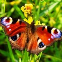 Обзор одежды и аксессуаров с изображениями бабочек>