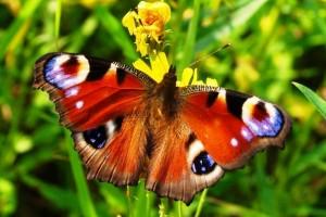 Обзор одежды и аксессуаров с изображениями бабочек